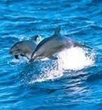 Port Stephens Dolphins