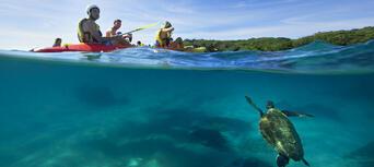 Byron Bay Sea Kayak with Dolphins and Turtles Thumbnail 2