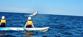 Byron Bay Sea Kayak with Dolphins and Turtles Thumbnail 3