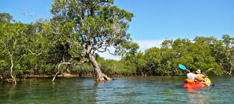 Byron Bay Sea Kayak with Dolphins and Turtles Thumbnail 5