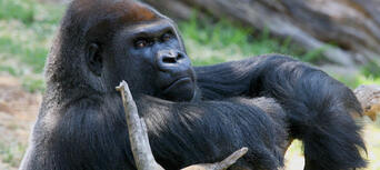Melbourne Zoo General Admission Thumbnail 6