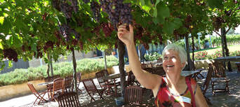 Swan Valley Wineries Full Day Tour with Morning Cruise Thumbnail 3