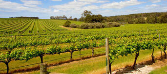 Swan Valley Wineries Afternoon Tour Thumbnail 1