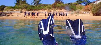 Mornington Peninsula Weedy Sea Dragons Snorkel Tour Thumbnail 2