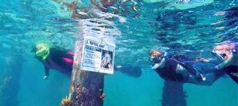 Mornington Peninsula Weedy Sea Dragons Snorkel Tour Thumbnail 5