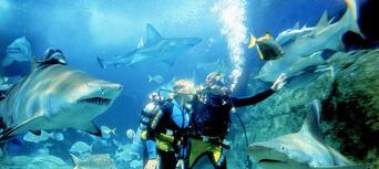 Melbourne Aquarium Shark Dive Xtreme Thumbnail 1