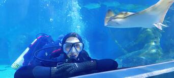 Melbourne Aquarium Shark Dive Xtreme Thumbnail 2