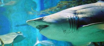 Melbourne Aquarium Shark Dive Xtreme Thumbnail 4