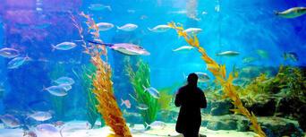 Melbourne Aquarium Shark Dive Xtreme Thumbnail 5