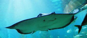 Melbourne Aquarium Shark Dive Xtreme Thumbnail 6
