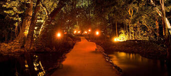 Flames of the Forest Aboriginal Cultural Dining Experience Thumbnail 4
