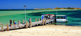 Penguin Island Cruise from Perth Thumbnail 5