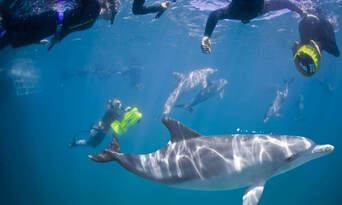 Perth Swim with Dolphins Cruise Thumbnail 1