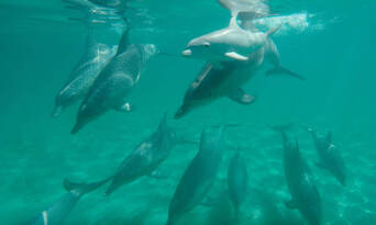 Perth Swim with Dolphins Cruise Thumbnail 4