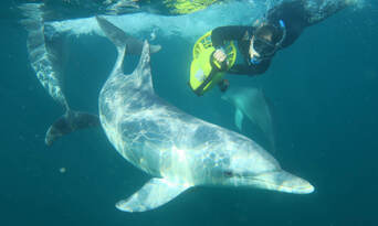 Perth Swim with Dolphins Cruise Thumbnail 2