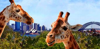 Sydney Flexi Attraction Pass - iVenture Card Thumbnail 2