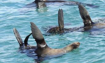 Dolphin and Seal Swim Tour in Queenscliff Thumbnail 5