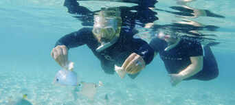 Gold Coast Dolphin and Stradbroke Island Kayaking Tour Thumbnail 2