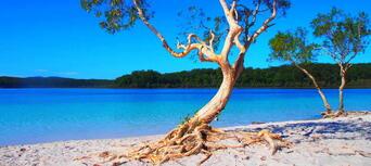 Fraser Island 1 Day Tour from Rainbow Beach Thumbnail 2