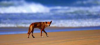 Fraser Island 1 Day Tour from Rainbow Beach Thumbnail 3
