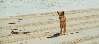 Fraser Island 1 Day Tour from Rainbow Beach Thumbnail 6