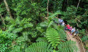 1 Day Daintree Rainforest, Cape Tribulation and Bloomfield Track Tour Thumbnail 1