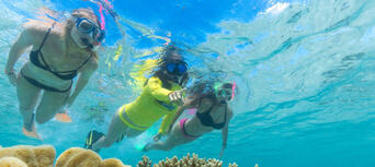 Great Barrier Reef Snorkel Trip from Cape Tribulation Thumbnail 5