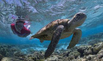 Lady Elliot Island Day Trip from Hervey Bay including Flights Thumbnail 1