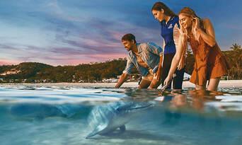 Tangalooma Island Resort Day Tour with Wild Dolphin Feeding & Transfers Thumbnail 1