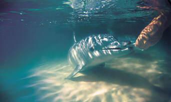 Tangalooma Island Resort Day Tour with Wild Dolphin Feeding & Transfers Thumbnail 2