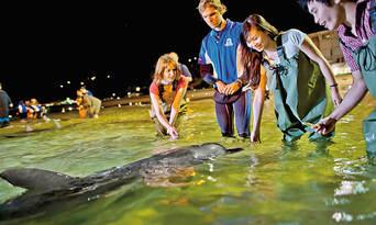 Tangalooma Island Resort Day Tour with Wild Dolphin Feeding & Transfers Thumbnail 3