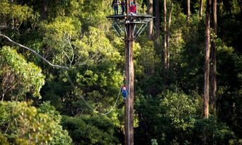 Treetops Adventure Daytime Tours Thumbnail 1