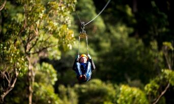 Treetops Adventure Daytime Tours Thumbnail 3