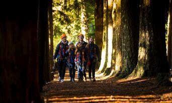 Treetops Adventure Daytime Tours Thumbnail 4