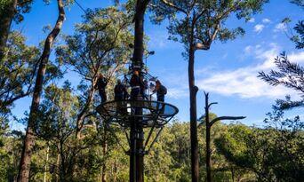 Treetops Adventure Daytime Tours Thumbnail 5