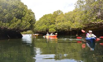 Dolphin Sanctuary & Ships Graveyard Kayak Tour Thumbnail 5