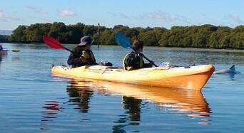 Dolphin Sanctuary & Ships Graveyard Kayak Tour Thumbnail 2