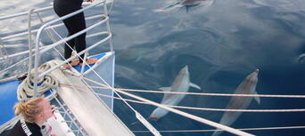 Adelaide Dolphin Watching Cruise Thumbnail 2