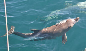 Adelaide Dolphin Watching Cruise Thumbnail 5