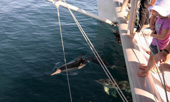 Adelaide Dolphin Watching Cruise Thumbnail 6