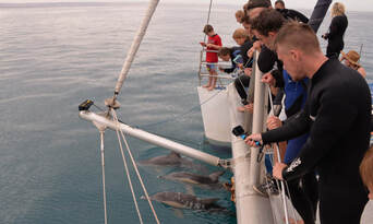 Adelaide Dolphin Watching Cruise Thumbnail 3