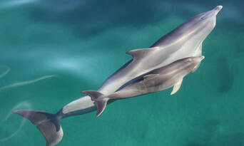 Adelaide Dolphin Watching Cruise Thumbnail 1