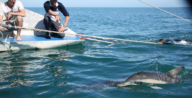 Adelaide Dolphin Watching Cruise