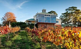 Adelaide Hills Wineries and Hahndorf Small Group Tour including Lunch Thumbnail 2