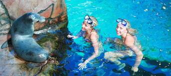Seal Swim at SEA LIFE Sunshine Coast Thumbnail 2