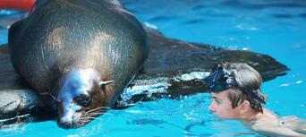 Seal Swim at SEA LIFE Sunshine Coast Thumbnail 3