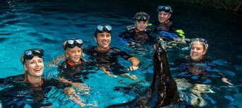 Seal Swim at SEA LIFE Sunshine Coast Thumbnail 1