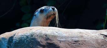 Seal Swim at SEA LIFE Sunshine Coast Thumbnail 6