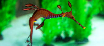 Seahorse World Guided Tour Thumbnail 3