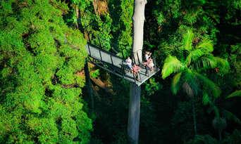 Tamborine Mountain Rainforest Skywalk Tickets Thumbnail 6